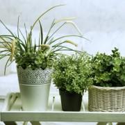 Cele 6 plante pe care este bine să le ții în dormitor