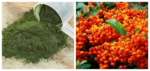 Suplimentul de spirulină cu extract total de cătină – combinația optimă!